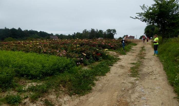 Mały skok w bok z trasy po zdjęcie na tle róż