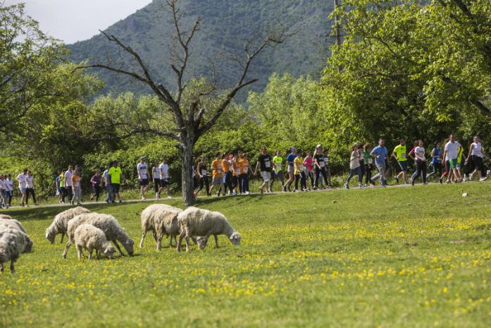 fot .Rezi Kenia / Kakheti /Gruzja