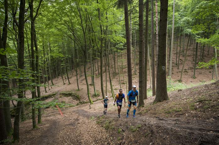 TriCity Trail / foto Piotr Dymus